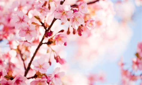 fiori a primavera fiori annunciano la primavera ecco quali sono leitv