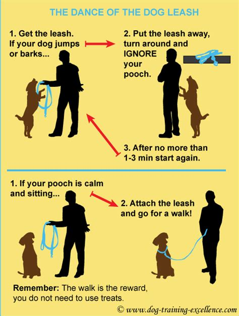how to your not to bark on walks 10 walking tips to enjoy a stroll with your friend