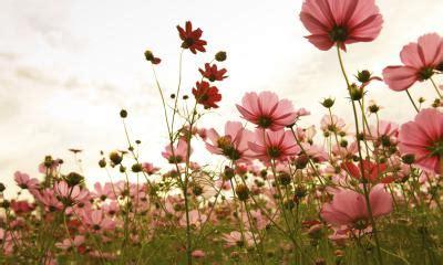 fiori di bach per l ansia fiori di bach per l ansia