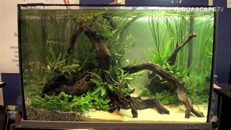 how to make aquascape aquascaping aquarium ideas from aquatics live 2012 part