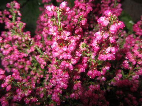 pink small flowers wet jooh