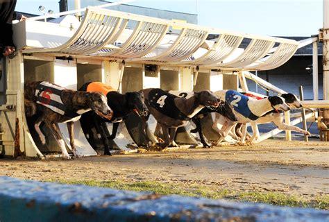 puppy racing derren brown racing track