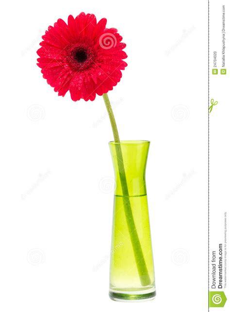 Tiff Bloom Bouquet By Velcris One gerber flower one gerbera in vase stock photo