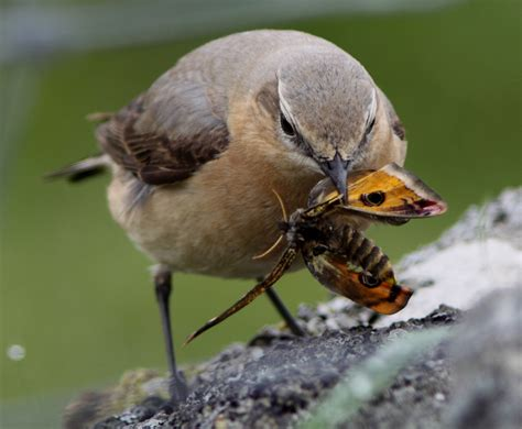 saving species our work the rspb community