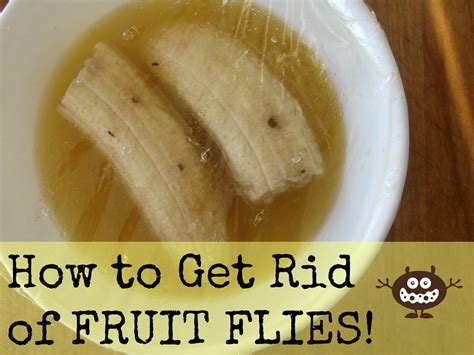 rid  fruit flies  gnats flies  rid