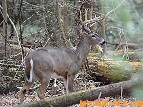 how to gut a buck in the woods how a sees turkeys and deer in the woods in