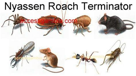 bed bug terminator nyassen roach terminator gambia co ltd