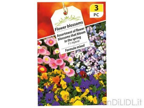 fiori lidl buste di sementi fiori fan di lidl