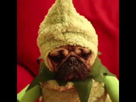 tv show compilation doug the pug compilation doug the pug s funniest vines doovi
