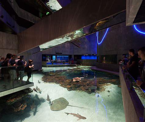 national aquarium blacktip reef exhibits  risd portfolios