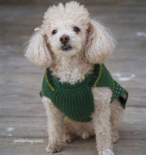 perros de pelo largo fotos y caracteristicas
