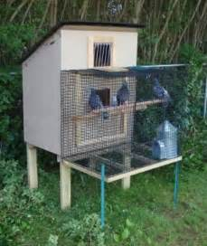 Raising Quail In Your Backyard My Pigeon Keeping And Racing Notes Small Coop Loft Plans