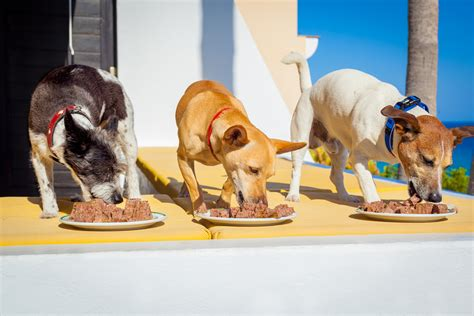 when do puppies eat food food choosing the right protein for your nutrapooch fresh food