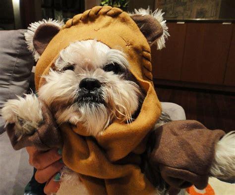 yorkie ewok costume wars ewok costume ewok costume ewok and