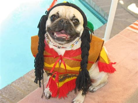 pug in pug costume 58 best pug costumes hahaha images on doggies pug costume and animales