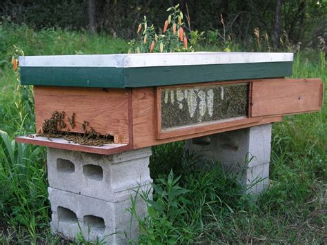 top bar bees top bar hive with window beekeeping in manitoba