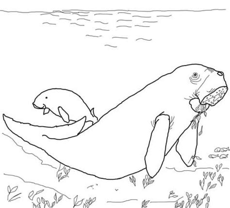 sea cow coloring page dugong coloring page supercoloring com