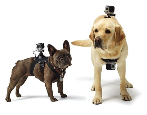 how to your to fetch and drop gopro fetch mount revzilla