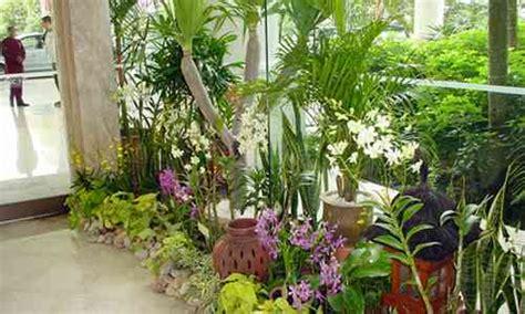 sewa tanaman hias rental tanaman hias