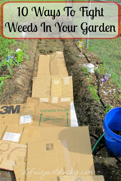 how to kill weeds in a vegetable garden 14 tips get rid of weeds from the garden once and for all