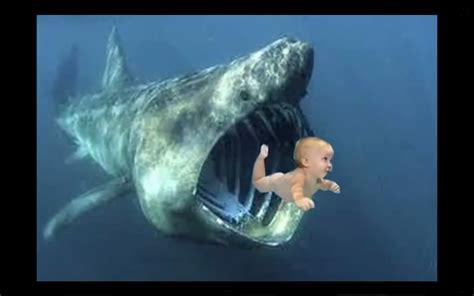 baby shark real life basking shark eats baby boy real or fake youtube
