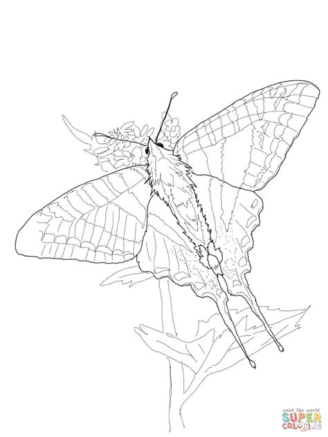 zebra butterfly coloring page zebra swallowtail coloring page free printable coloring