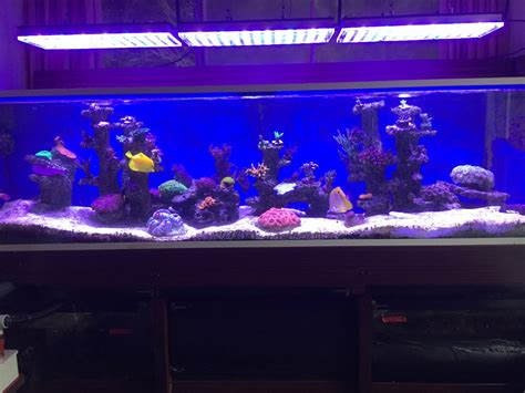 Led Aquarium Lighting 1400 liters aquarium makeover in uk with atlantik led