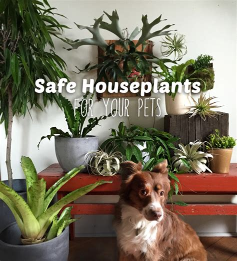 safe house plants for dogs houseplants not toxic to cats