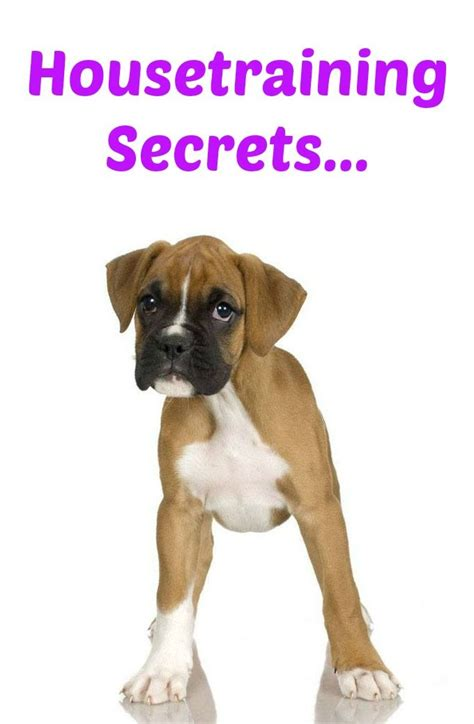 boxer names 372 best images about boxers on puppy names brindle boxer puppies and