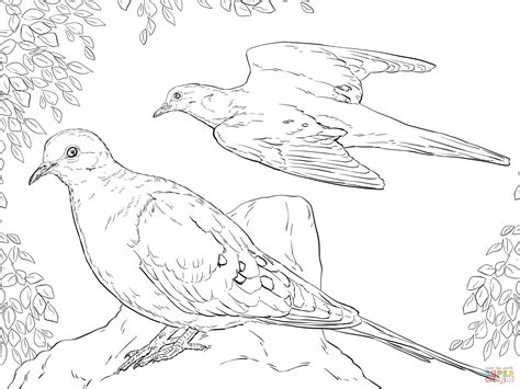 turtle dove coloring page two mourning doves coloring page free printable coloring