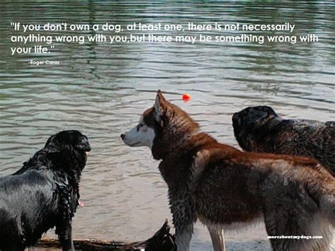 quote about dogs quotes