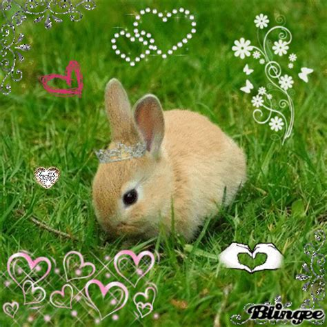 coding bunny bunny animated pictures for 117176467