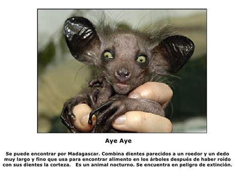 imagenes de animales raros y deformes los 10 animales m 225 s feos