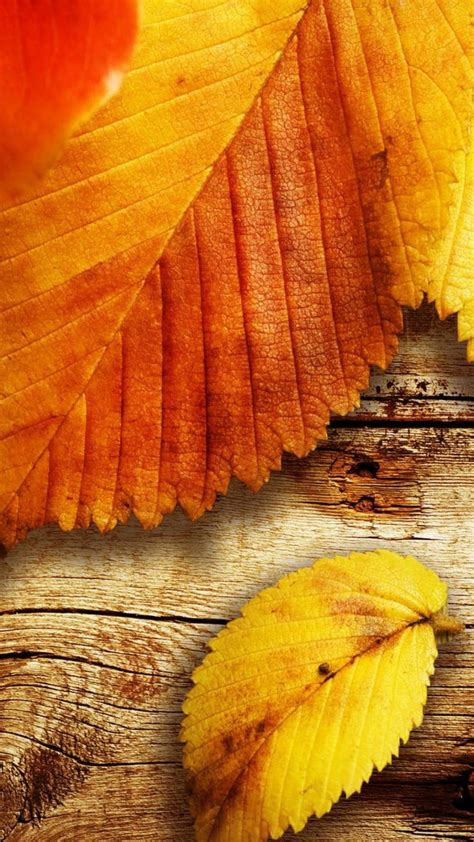 autumn hd wallpapers  xiaomi redmi note  wallpapers