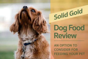 solid gold food reviews labrador hq everything labrador retriever