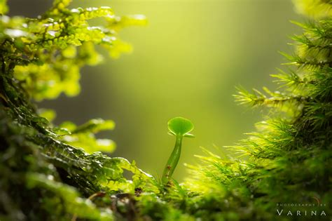 Landscape Photography With Macro Lens Opening Your To Tiny Landscapes