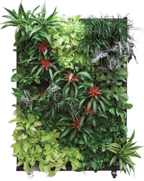 Container Gardening Guide - living walls creative interior plantscapes
