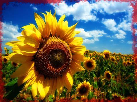 imagenes para pc de fondo de pantalla fotos para fondo de pantalla pc sobre plantas imagenes