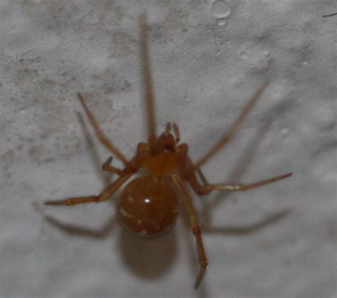 red house spider red house spider picture house interior