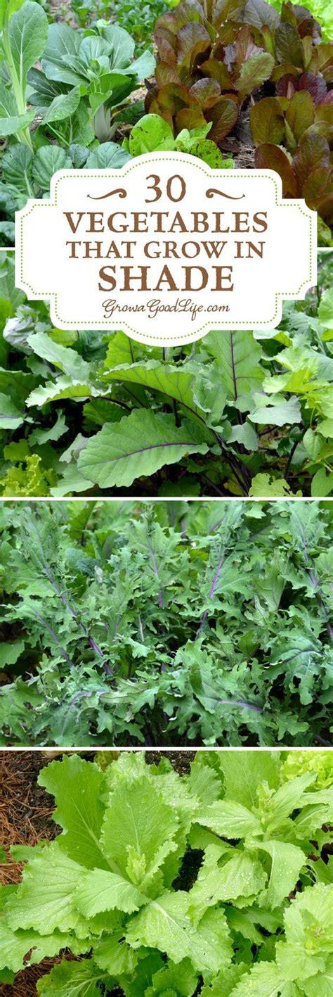 shade garden vegetables 30 vegetables that grow in shade gardens vegetables and summer