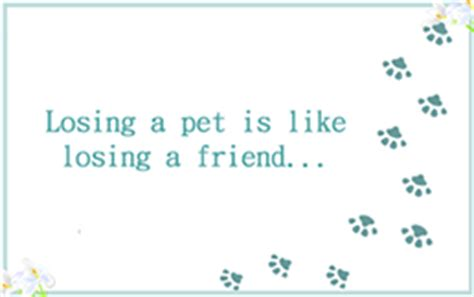 pet sympathy card template 5 free pet sympathy condolence greeting cards hster