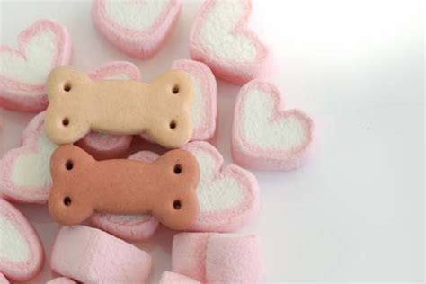 can dogs marshmallows marshmallows for dogs 101 can dogs eat marshmallows
