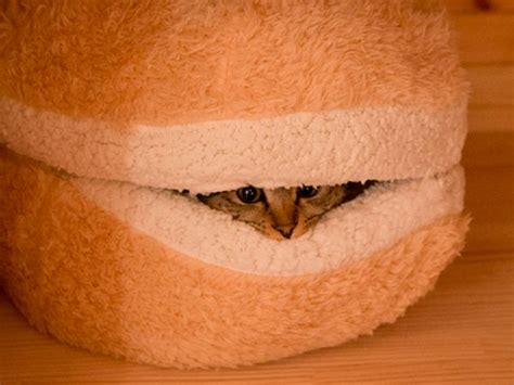 hamburger cat bed disturb the cat hamburger and prepare to be scratched
