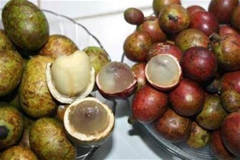 Bibit Buah Matoa matoa fruit bali bone craft the best bone carving in