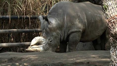 imagenes de animales del zoologico zoologico de chapultepec animales www pixshark com