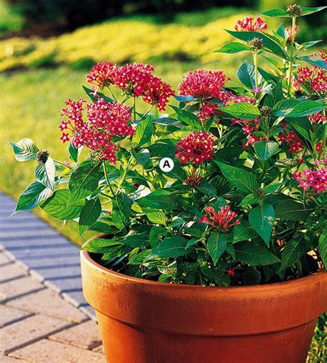 best container gardens top butterfly container garden ideas