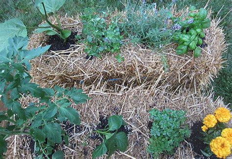 make a straw bale planter garden club