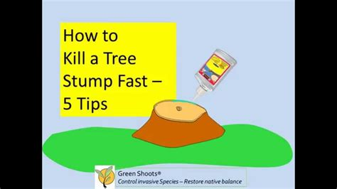 how to kill roots how to kill a tree stump fast 5 tips