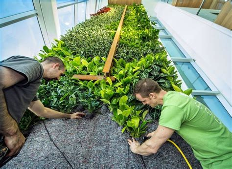 strutture per giardini verticali giardini verticali realizzazione crea giardino