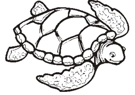 color of turtles sea turtle coloring pages to and print for free